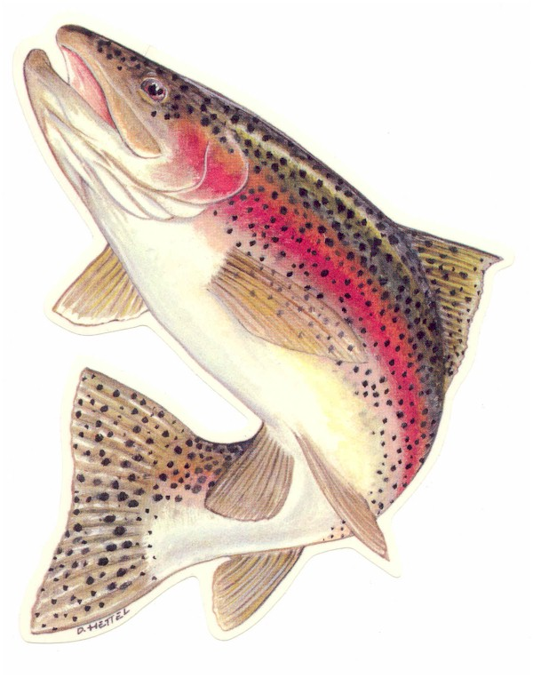Rainbow Trout -- before