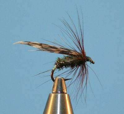 alderfly nymph