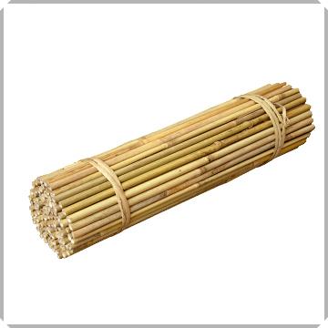 Tonkin bamboo