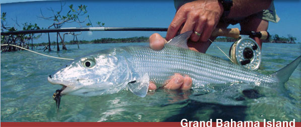 Bonefish caught in Grand Bahama