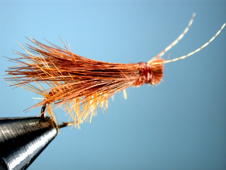 brown stonfly imitation