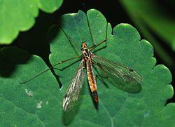 crane fly artificial