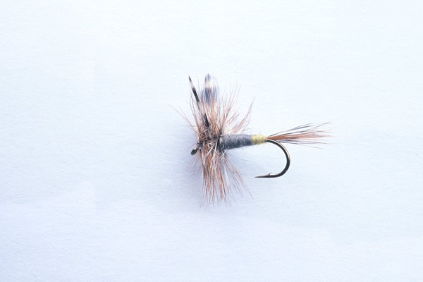A female Adams Dry Fly