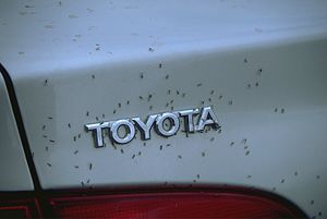a swarm of midge plastered on a Toyota
