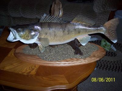 9lb 8oz Walleye 29