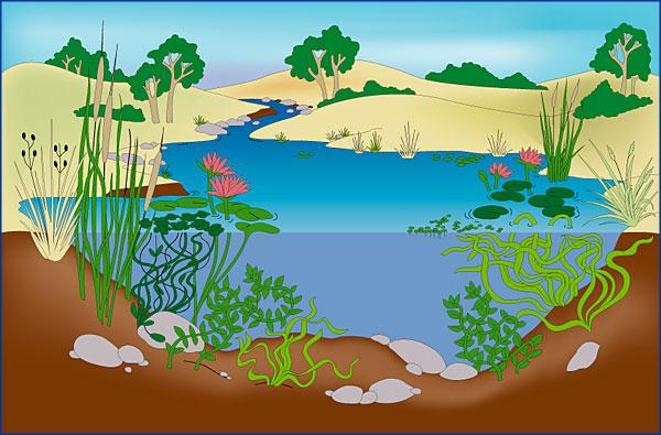 snail pond