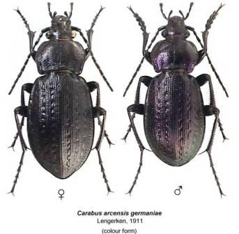 Beetles are chock full of protein