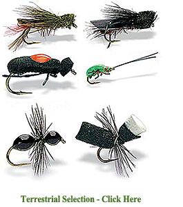 Set of Terrestrial Flies